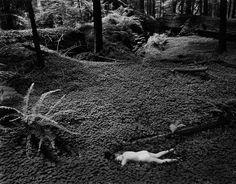 Wynn Bullock, Child in Forest, 1951