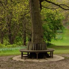Bench around a tree trunk