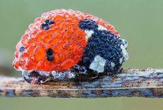 Ladybug in the morning dew