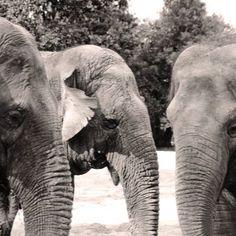 #charentemaritime #zoo #lapalmyre #elephant