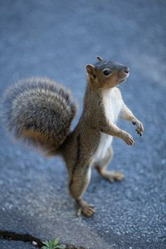 Q and A with fox squirrel research about their nut sorting behavior