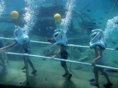 Sea Trek St. Maarten: trying to decide if i could do this without having a panic attack!