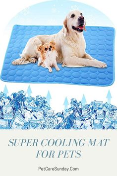 Pet Cooling Mat for dogs can help your dog relax on hot days or after an enjoyable play session with others. It can provide a fun spot for dogs to lie down while you hang out at the backyard, by the pool, with the whole family. #coolingmatfordogs #coolingmattresstopper #coolingmattresspad #coolingmatfordogsdiy #coolingmat Pet Cooling Mat, Dog Leg, Best Mattress, Dogs Golden Retriever, Mesh Material, Hot Days, Happy Dogs, Large Dogs, Hanging Out