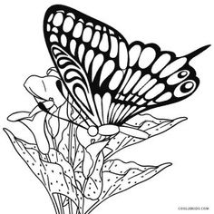 monarch caterpillar coloring pages insect coloring pages pinterest - Monarch Caterpillar Coloring Page