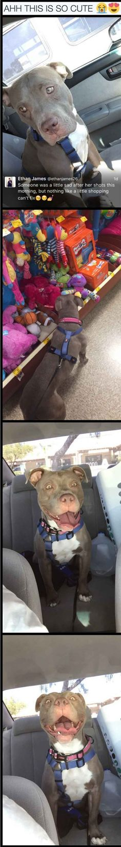 All pits deserve to be loved like this! <<< I no joke thought the pitbull was wearing a tux in the first picture lmao Cute Funny Animals, Funny Animal Pictures, Funny Dogs, Cute Pictures, Funny Cute, Love My Dog, Animals And Pets, Baby Animals, Cute Puppies