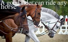 """Honestly this is so true. I hate it when people have ridden the same horse since they have started riding and say """"Oh yeah I'm the top rider of my academy! Equine Quotes, Equestrian Quotes, Horse Riding Quotes, Horse Riding Tips, Horse Girl, Horse Love, Pretty Horses, Beautiful Horses, Inspirational Horse Quotes"""