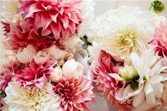 coral and ivory dahlias, cream david austen roses