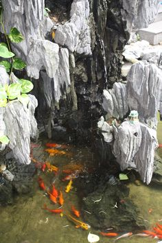 Cool ponds on pinterest ponds koi ponds and pond ideas for Cool koi ponds