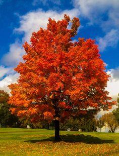 Fall Colors Digital Print Shirt