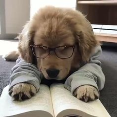 Home - Pets or Animals Super Cute Puppies, Cute Dogs And Puppies, Cute Baby Dogs, Doggies, Cute Funny Dogs, Cute Funny Animals, Cute Cats, Funny Kitties, Baby Animals Pictures