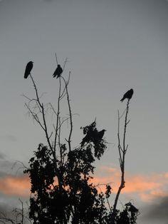 Tiga burung menyendiri