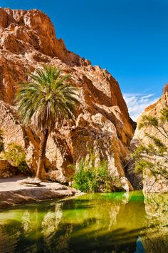 Chebika Oasis, Tunisia. I want to see something like this one day