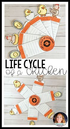 Students will love researching the life cycle of a chicken! Frog egg to chick to full grown chicken, your kids complete this interactive project. This STEM activity makes a great bulletin board display and science center for first graders, second graders, Reading Activities, Science Activities, Science Resources, Science Centers, Sequencing Activities, Science Experiments, Montessori, Primary Science, Kid Science