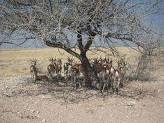 Namibia: una terra dove i cinque sensi non bastano. #giruland #diariodiviaggio #travel #namibia #africa #safari #fotografia #animali #elefante #giraffa #tigri #rinoceronte #gazzella #condor #blog #chiara #manzini