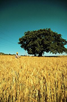 Harvest | Flickr - Photo Sharing!