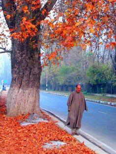 Evenings in Kashmir