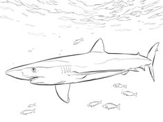 Images For > Realistic Sea Animal Coloring Pages Shark ...