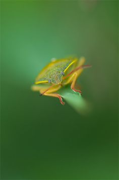 """Macro Photography Tips for Getting Close by Mary Foster. Photo: """"alone in the void"""" captured by Michele."""