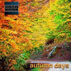Autum days #autum #colors #socialmedia #marketing