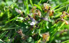 It's flying ant season again. Eleanor Doughty brings you the low-down on the   pesky critters, and how to get rid of them