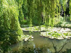 Monet's Garden...Repinned by your friends at SuperHumanToothSoap.com