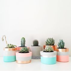 Happy little plants by @coralandherb