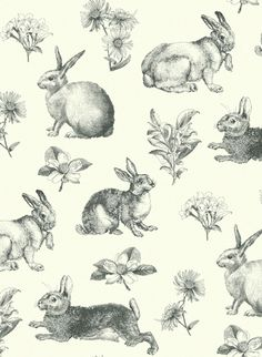 York Wallcoverings Inspired by Color Black and White Bunny Toile Wallpaper