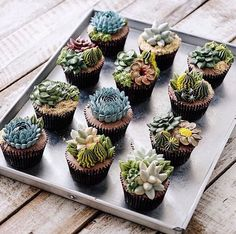 cupcake, cactus, and plants image
