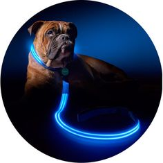 PoochLight leashes and collars are ideal for people that live in areas without sidewalks.   41 Insanely Clever Products Your Dog Deserves To Own
