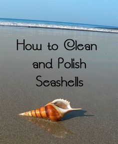 How to Clean and Polish Seashells from your #mermaid adventures #finfun #mermaidtail