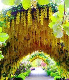 100 Gartengestaltung Bilder und inspiriеrende Ideen für Ihren Garten - garten gestalten gelbes blumengewölbe