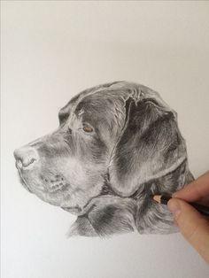 Labrador in kleurpotlood
