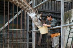 """Le film """"Girafada"""" raconté par son réalisateur - 1jour1actu"""