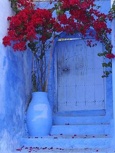 Flowering bougainvillea at the doorway of the blue house in Chefchaouen, Morocco ✫♦๏༺✿༻☘‿MO Jul ‿❀🎄✫🍃🌹🍃🔷️❁`✿~⊱✿ღ~❥༺✿༻🌺♛༺ ♡⊰~♥⛩⚘☮️❋ Blue Aesthetic, Doorway, Windows And Doors, My Favorite Color, Belle Photo, Shades Of Blue, Beautiful Places, House Beautiful, Furniture Plans