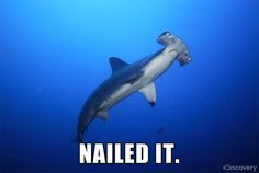 shark week   ... … Grab your chums for this Shark Week party shark week – Brokelyn