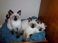 D Chapin's Cats ~ How's this for a Birthday surprise!