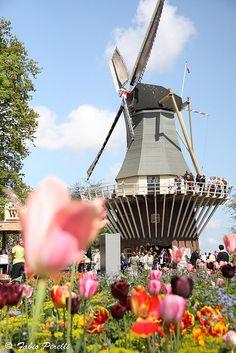 """Windmill among the tulips ""  Keukenhof Garden in   Amsterdam, Holland, Photo by Fabio Perelli #Netherlands #travel"