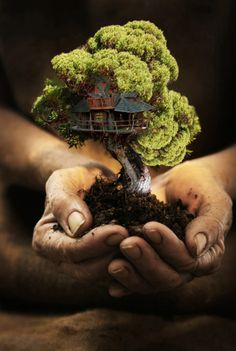 Want to discover art related to bonsai? Check out inspiring examples of bonsai artwork on DeviantArt, and get inspired by our community of talented artists. Bonsai Plants, Bonsai Garden, Bonsai Trees, Diy Jardim, Miniature Trees, Miniature Houses, Foto Art, Parcs, Fairy Houses