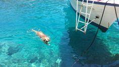 golden swimming