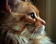Trudy - Portrait
