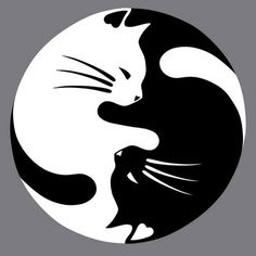 Yin Yang lucky cat tattoo - this would be nice with a watercolor wash instead of black CAT AND DOG YING YANG Yin Yang Tattoos, Lucky Cat Tattoo, Cat Drawing, Art Plastique, Stone Art, Pyrography, Rock Art, Crazy Cats, Painted Rocks