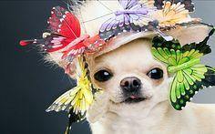 partydog
