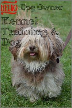 Some Recommendations On Kennel Training A Dog For Pet Buyers Along With Owners. * Check this useful article by going to the link at the image. Kennel Training A Dog, Crate Training, Dog Training Tips, Luxury Dog Kennels, Outdoor Dog, Stress And Anxiety, Doge, Dog Owners, Have Fun