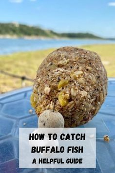 Check out this hlepful guide on how to successfully fish for buffalo! #buffalofish #buffalocarp #carpfishing Carp Fishing, Fishing Tips, Buffalo, Vegetables, Check, Food, Essen, Vegetable Recipes, Meals