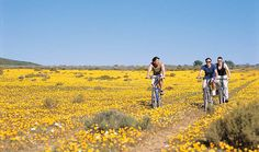 Can you imagine a better place to cycle? In the stunning Karoo when the flowers are in full bloom you get to enjoy one of most unusual wonders . This you can experience at Bushmans Kloof nature reserve, Cape Town Kruger National Park, National Parks, Nature Reserve, Amazing Adventures, Africa Travel, Weekend Getaways, Wilderness, Kayaking, South Africa