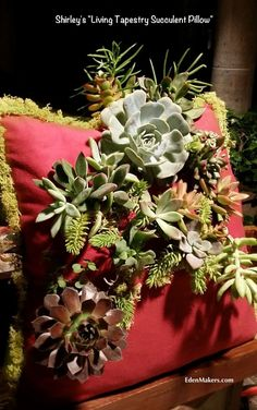 "Shirley Bovshow's ""Living Tapestry Succulent Pillow!"" As seen on Home and Family Show on Hallmark. Learn how to make this beautiful and easy creative succulent planter! Read more on EdenMakers.com"