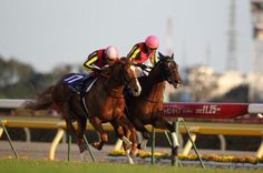 Orfevre and Gentildonna battling out the Japan Cup!
