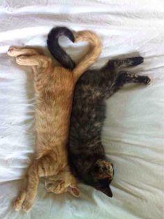 kitten tail hearts=
