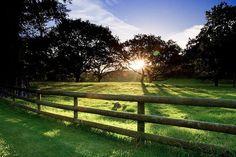 photography-new-zealand-Cornwall-Park.jpg (600×400)