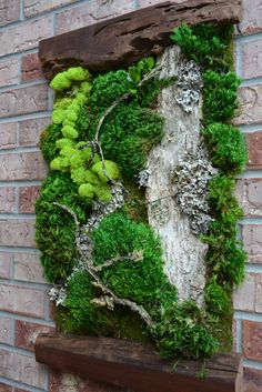 Beautiful Preserved Living Moss framed by two pieces of live edge black walnut. These preserved moss art pieces are a little new to my Etsy Shop. Since Ive been a designer for so many years and worked with moss this was simple for me to master. These wall art pieces are so natural and very dramatic for any wall and Ive been making them for acupuncturist meditation spaces.  * Approx: 24 Long  22 Wide